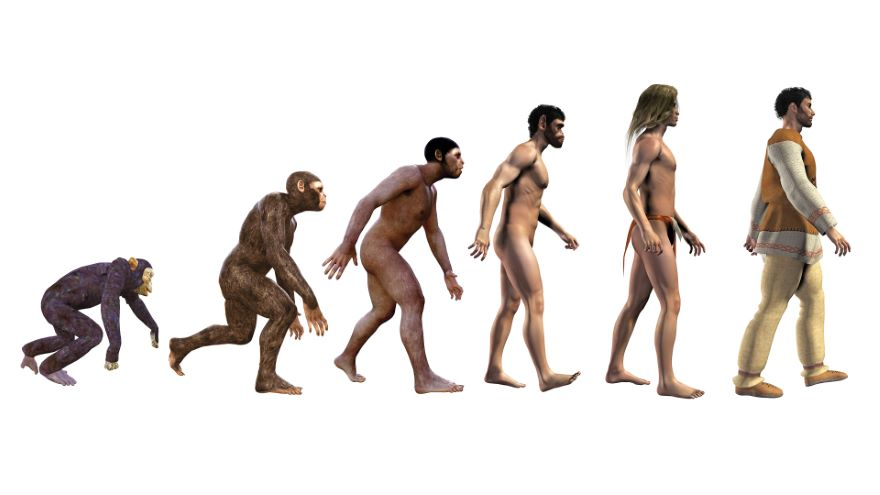 Apes, Humans, and Neanderthals