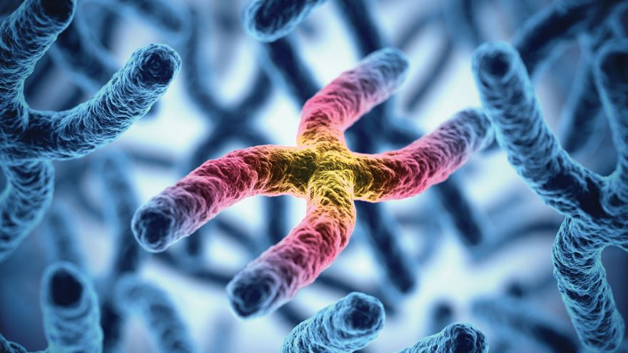 Animal Reproduction: Genes and Environment