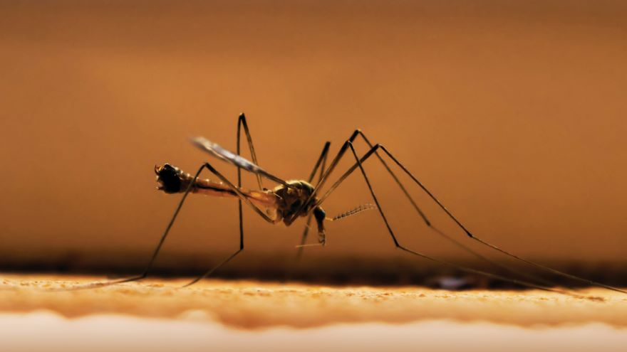 Deadly Invertebrates: Vectors and Parasites