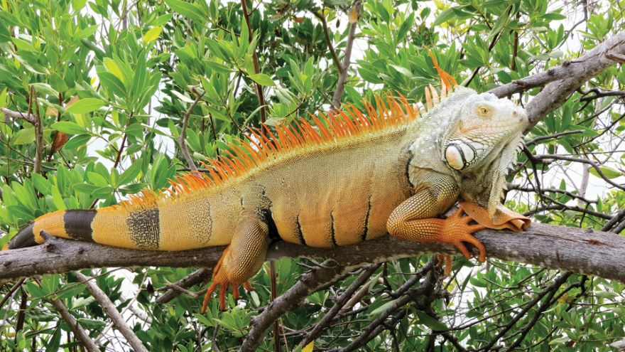 Reptiles: Adaptations for Living on Land
