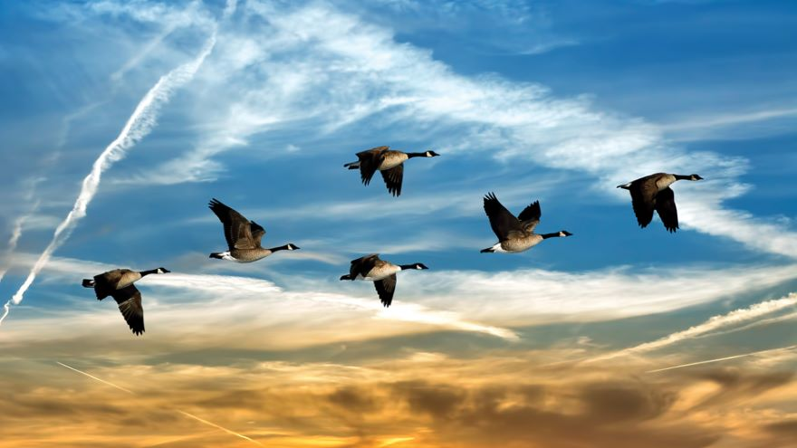 Taking to the Sky: Bird Migration