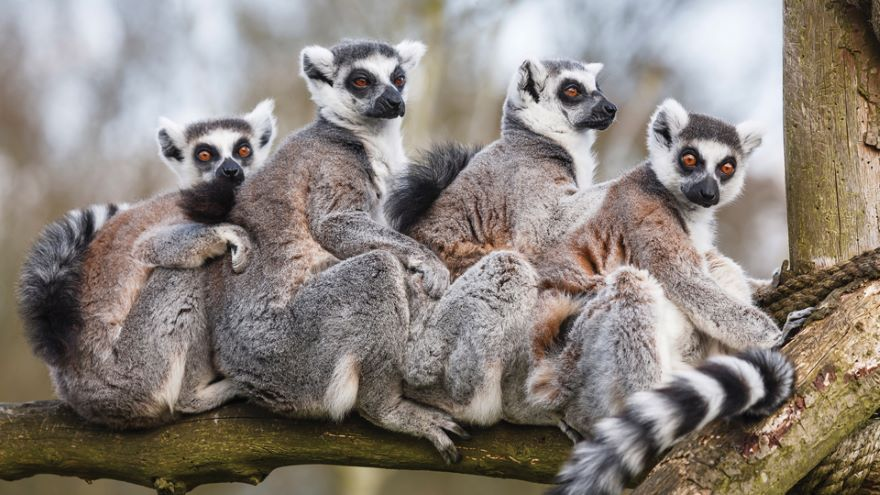 Primate Mammals: Diverse Forest Dwellers