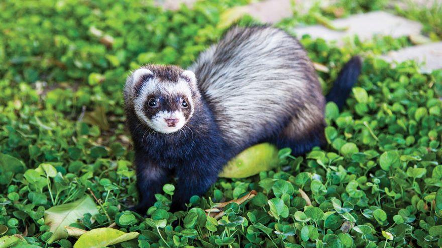 Ethology: Studying Animal Behavior