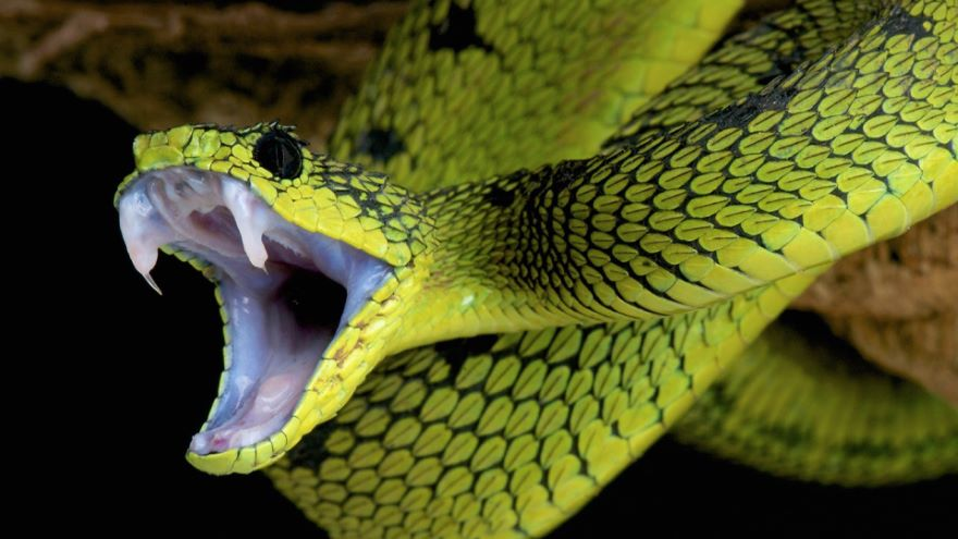 Poisons, Toxins, and Venoms