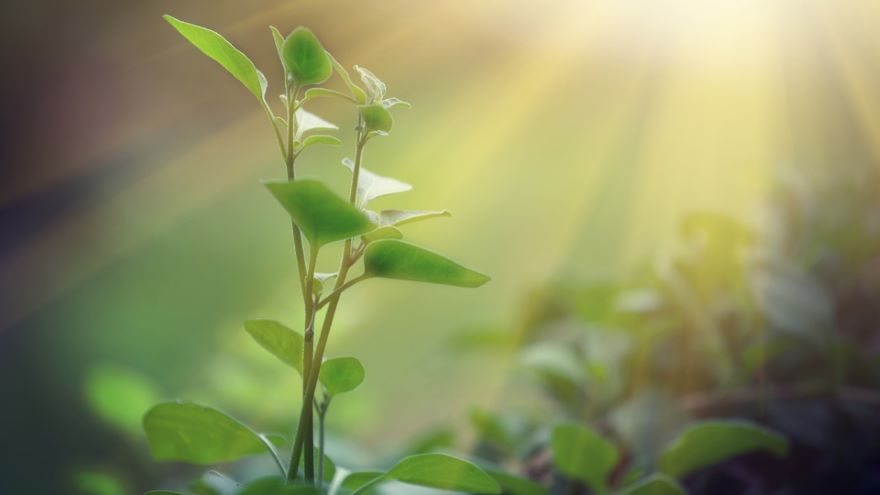 Chemical Energy, Biomass, and Photosynthesis