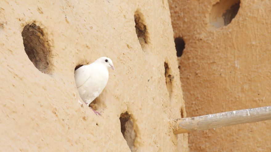Things in Categories-The Pigeonhole Tactic