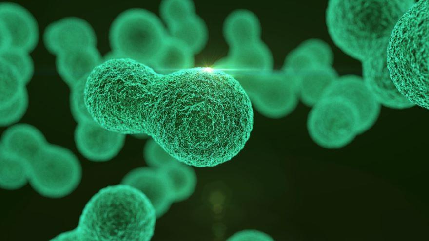Dividing DNA Between Dividing Cells