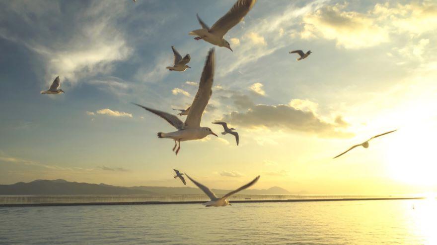 Mechanisms of Evolutionary Change