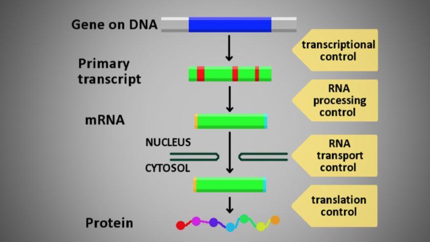 Control of Gene Expression I