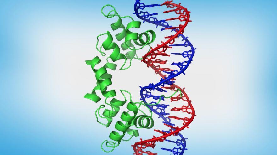 Control of Gene Expression II