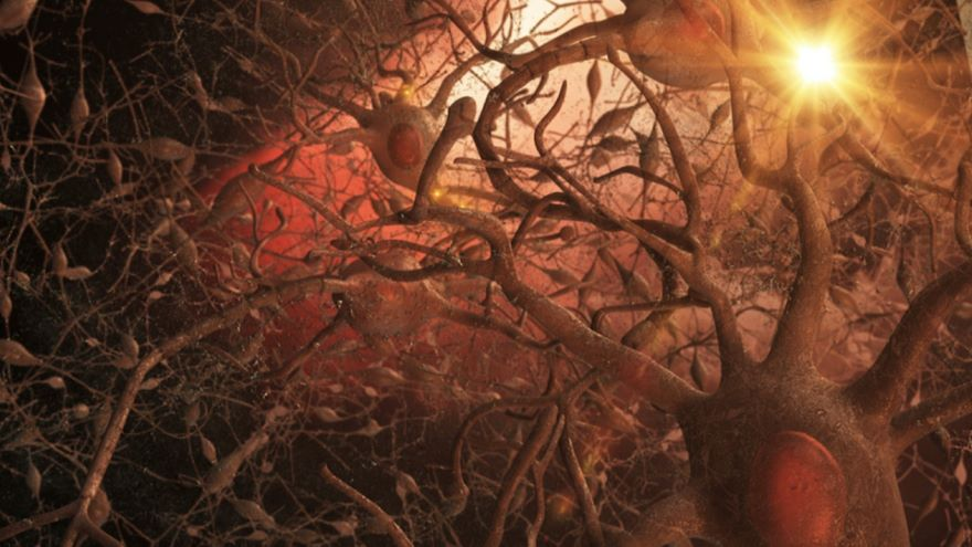 What Is Special about Neurons?