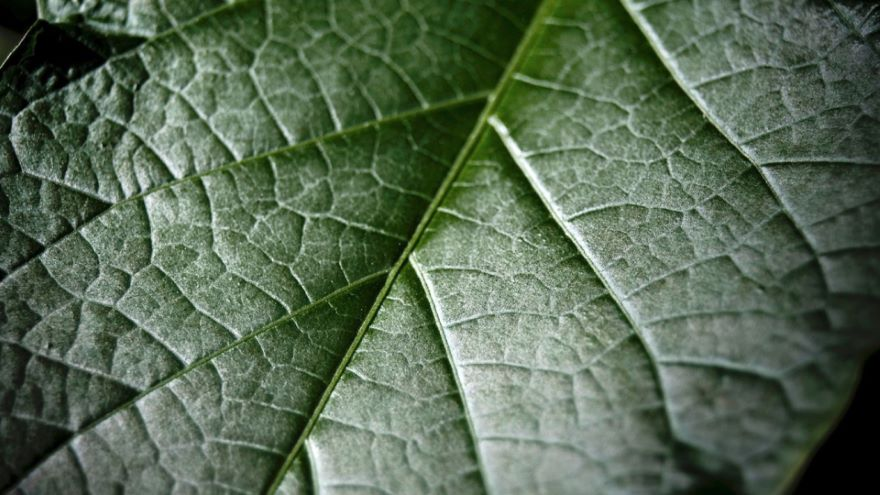 Form and Function in Plants II