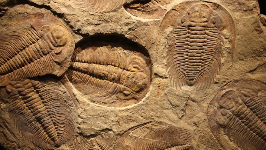 Paleontology and Geologic Time