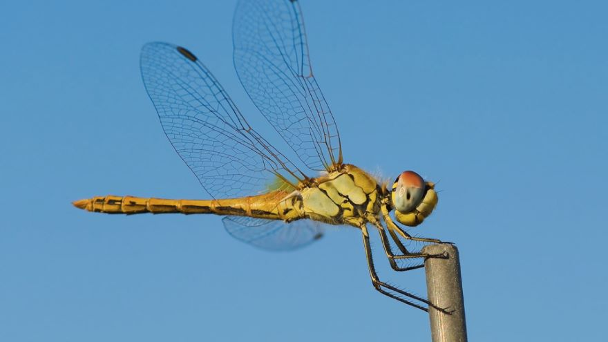 Origins of Insects and of Powered Flight