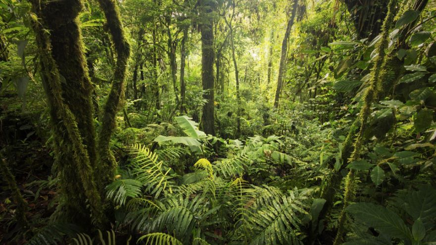 Seed Plants and the First Forests
