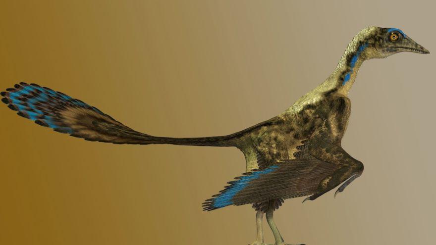 Birds-The Dinosaurs among Us