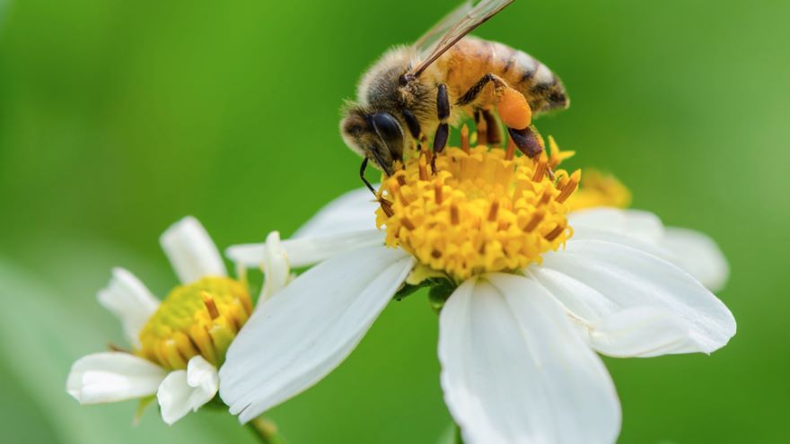The First Flowers and Pollinator Coevolution