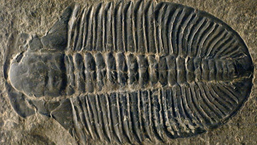 Fossil Clocks