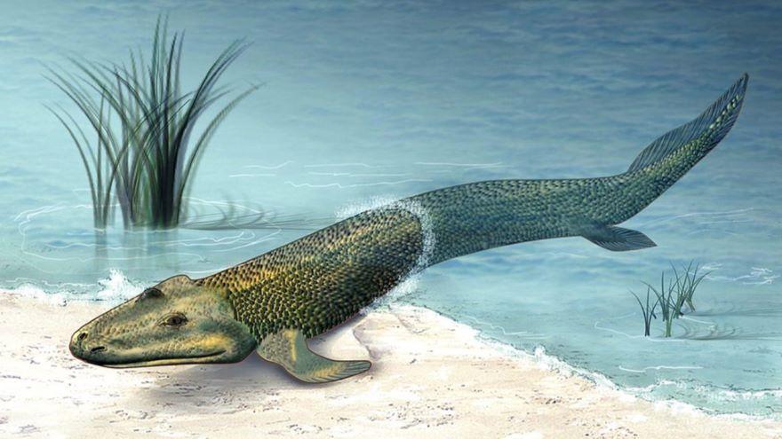Tiktaalik-The Search for a Fishapod