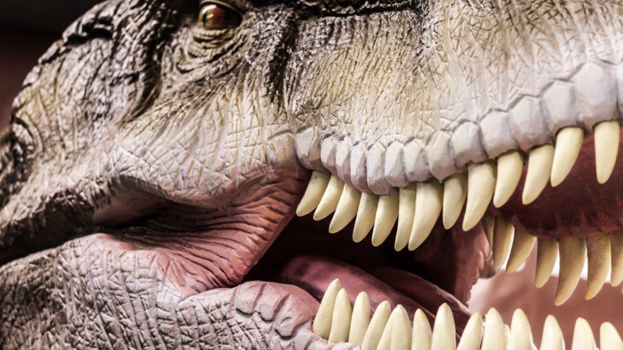 Letting the Dinosaurs Speak-Paleobehavior