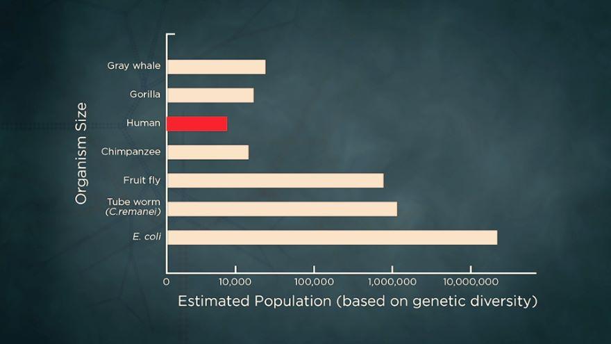 Genetic Drift: When Evolution Is Random