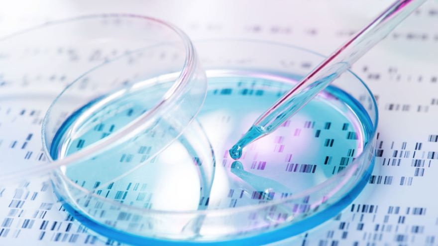 DNA in Identification-Forensics