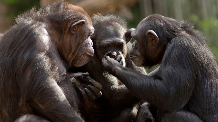 Monkey and Ape Social Behavior