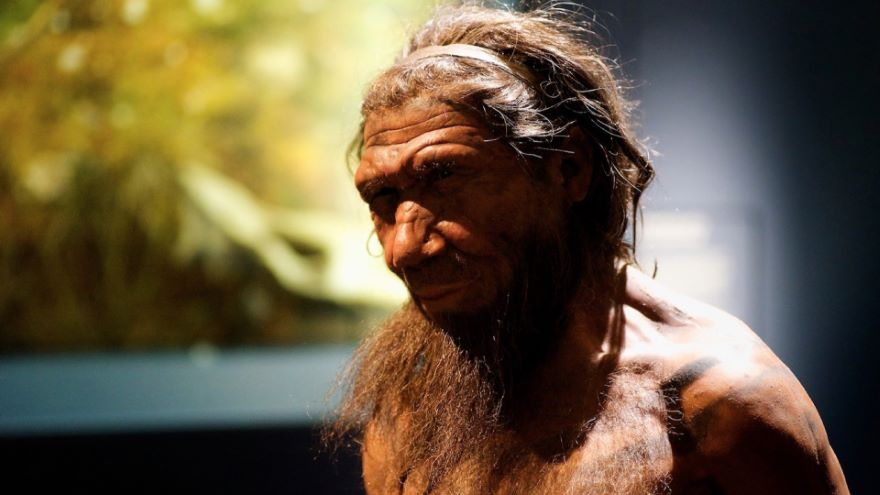 Who Were the Neandertals?