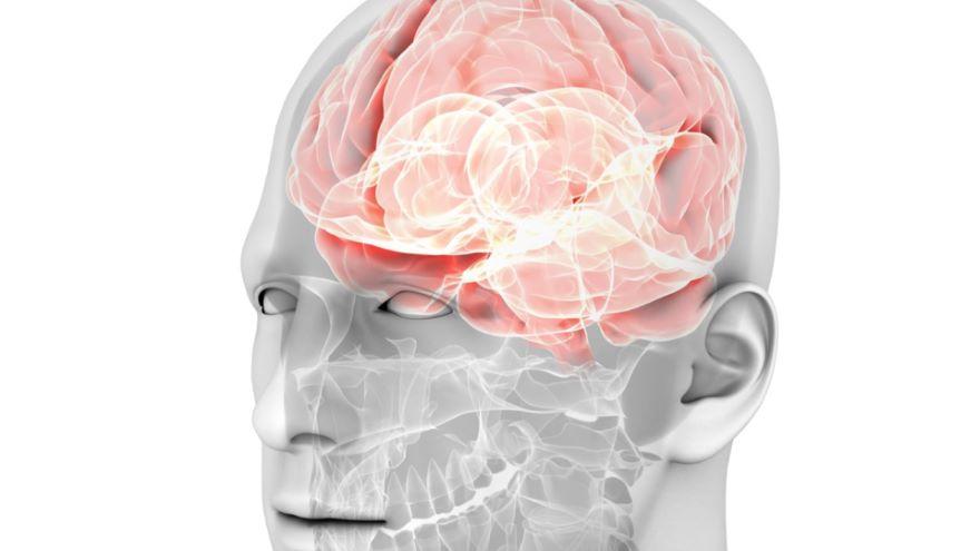 Central Nervous System-Development