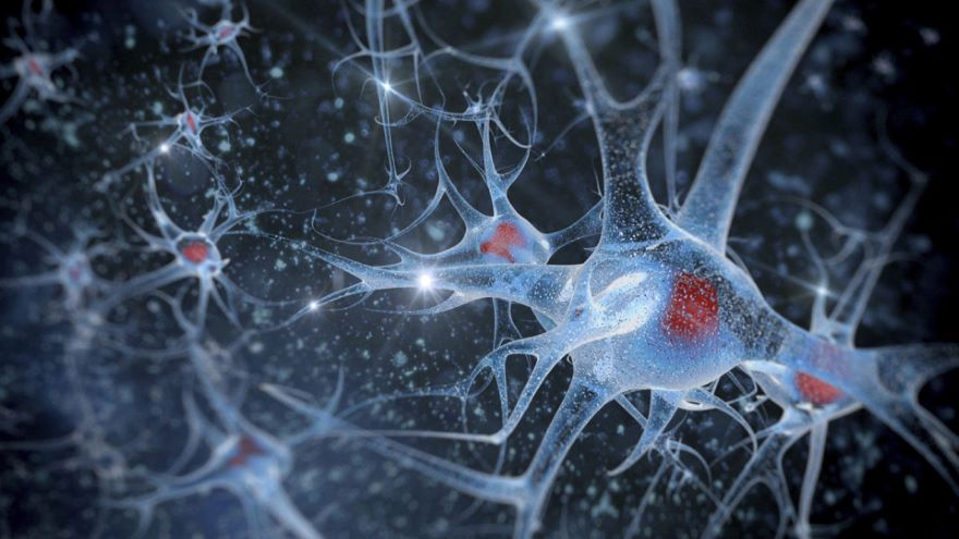 Pathways and Synapses