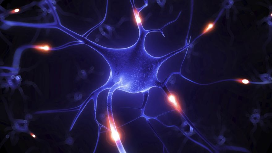 How Two Neurons Communicate