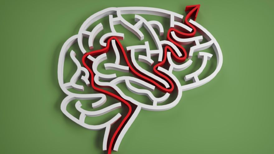 The Regulation of Hormones by the Brain