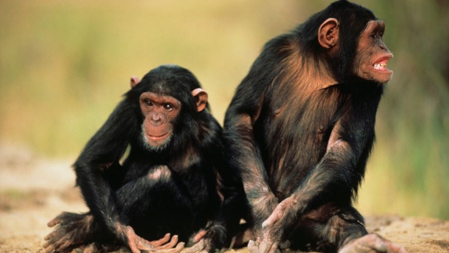 An Introduction to Ethology