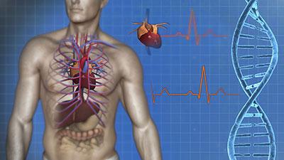 Cardiovascular System-Anatomy of the Heart