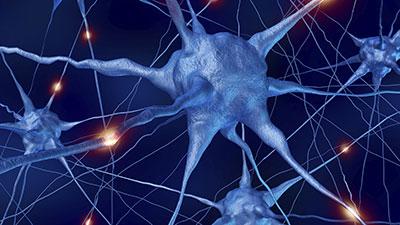 Nervous System-Autonomic Nervous System and Cranial Nerves
