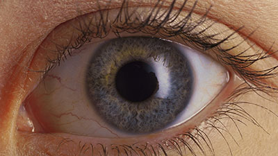 Nervous System-The Eyes