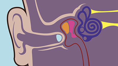 Nervous System-The Ears, Hearing, and Equilibrium