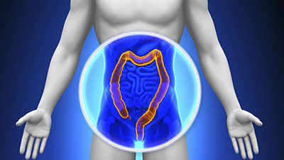 Digestive System-Physiology of the Small Intestine, Colon, and Rectum