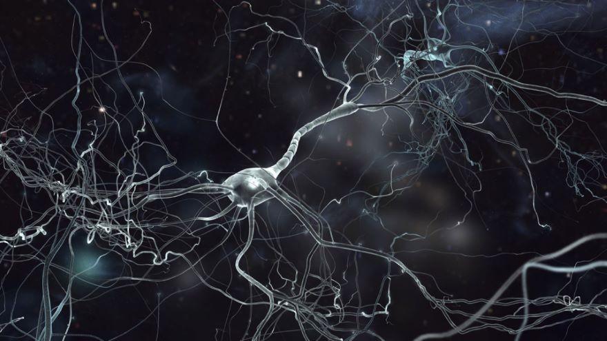 Neuroplasticity-Your Flexible Brain