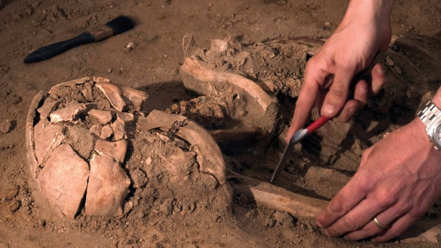 Paleoanthropology and the Hominin Family