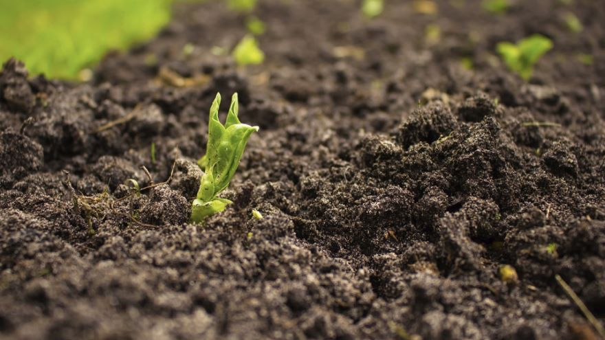 Soils and the Clay Minerals