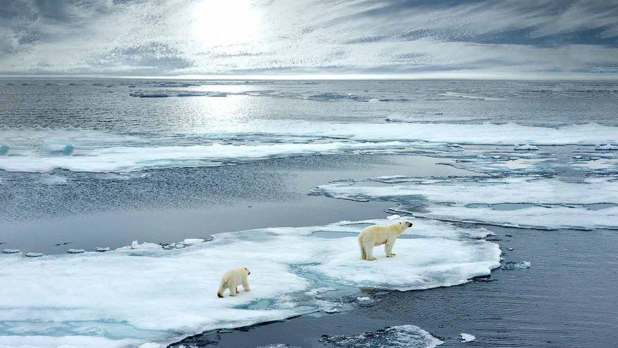 Climate and Habitat-Twin Ecological Crises
