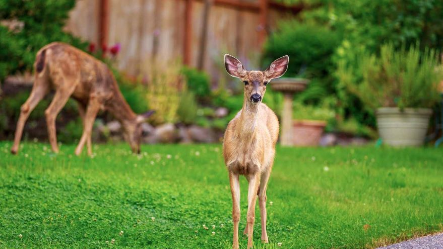 Wildlife Adaptation to Human Landscapes