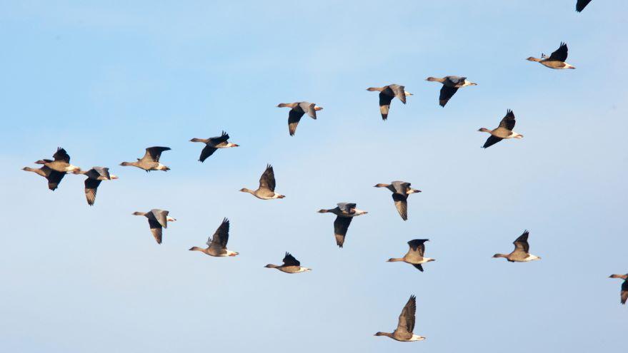Human Impacts on Animal Migration