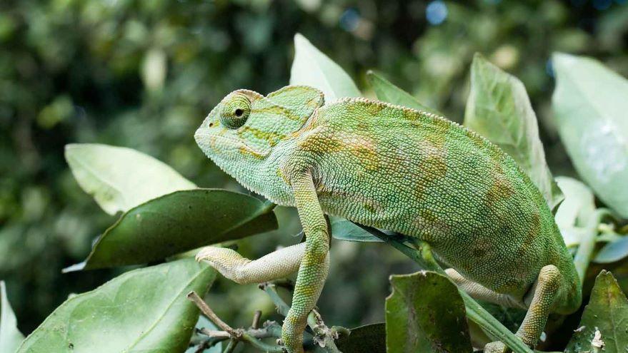 Coevolution among Species