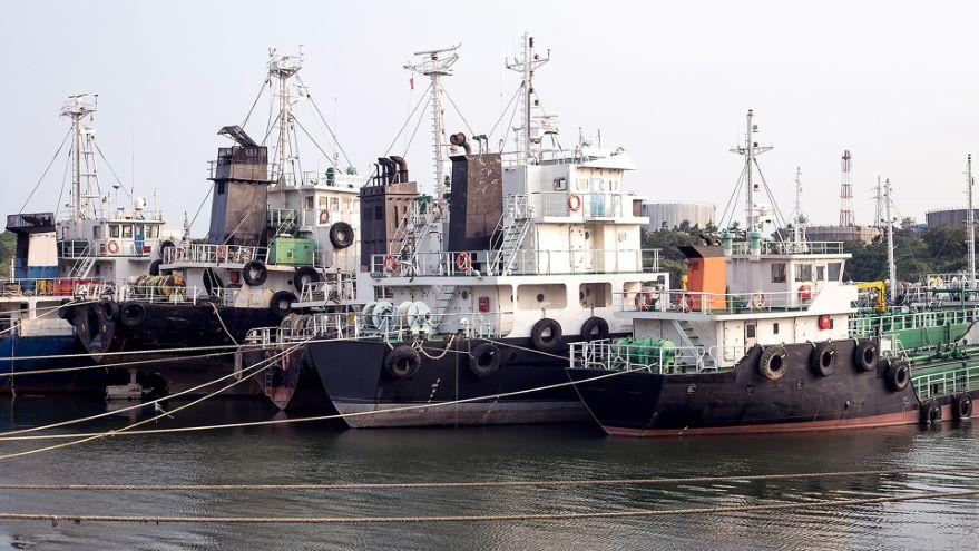 Marine Megavertebrates and Their Fisheries
