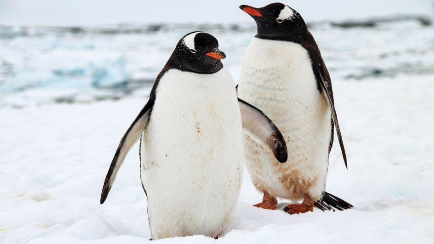 How Animals Adapt to Ocean Temperatures