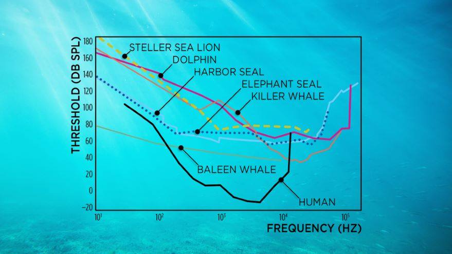The Importance of Sound to Ocean Life