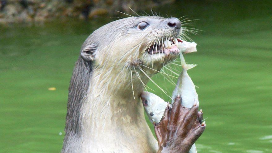 Food and Foraging among Marine Mammals