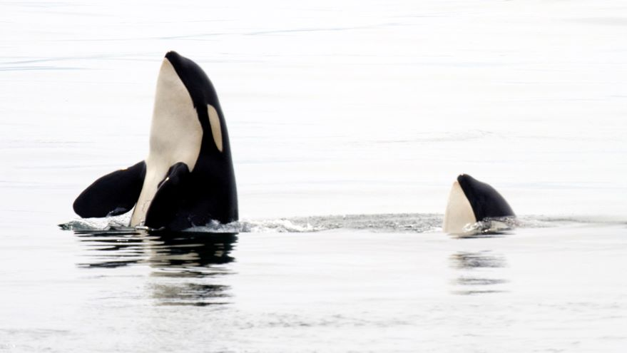 Behavior and Sociality in Marine Mammals